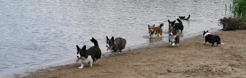 940x300 hondenrennen op strandje